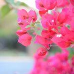 flowersWEB
